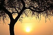 Sagma, Parque Nacional de Zakouma, Chad