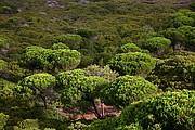 Parque Natural Sierra Cascais, Cascais, Portugal