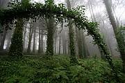 Parque Natural Sierra de Sintra, Sintra, Portugal