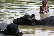 Rio Yamuna, Agra, India