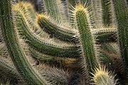 Jardin de Cactus, Lanzarote, España