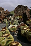 Photo of Lanzarote, Cactus Garden, Spain - Jardiin de cactus