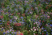 Campo de Flores, Valle del Loira, Francia