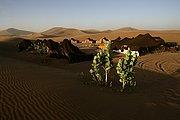 Camara Canon EOS-1Ds Mark II Campamento de Sahara Service en Erg Chigaga Marruecos ERG CHIGAGA Foto: 16586