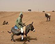 M Hamid, M Hamid, Marruecos