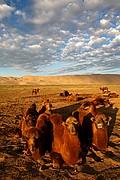 Desierto del Gobi, Desierto del Gobi, Mongolia