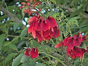 Camara KODAK EASYSHARE Z950 DIGITAL C Flor Nacional de Argentina ( Ceibo) Graciela Brescia TANDIL Foto: 24713