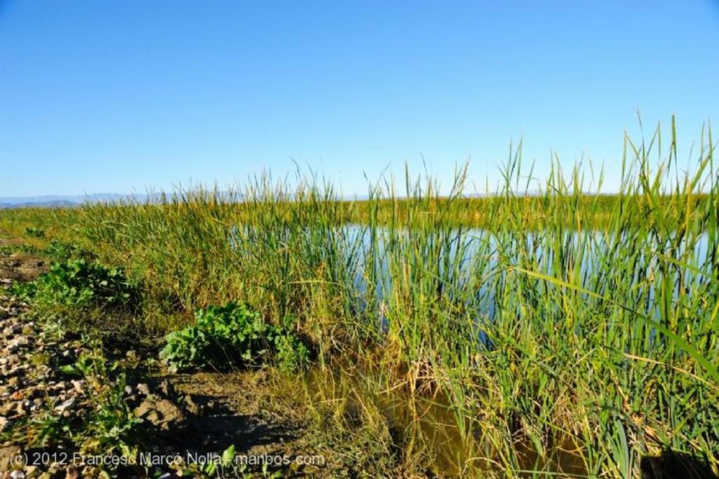 El Delta del Ebro Laguna La Tancada Tarragona