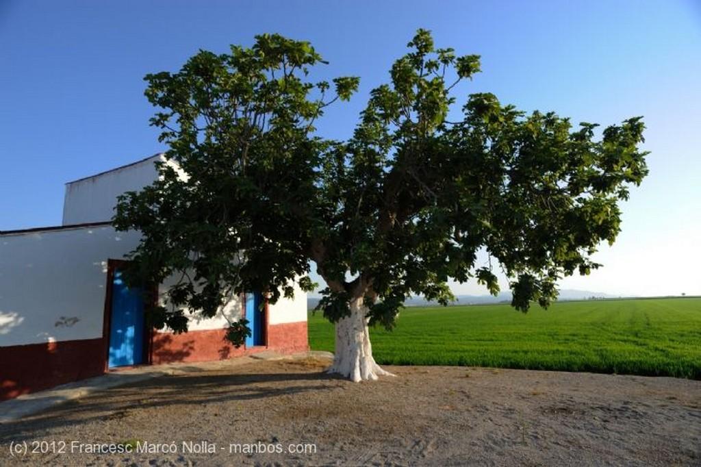 El Delta del Ebro El Cultivo del Arroz Tarragona