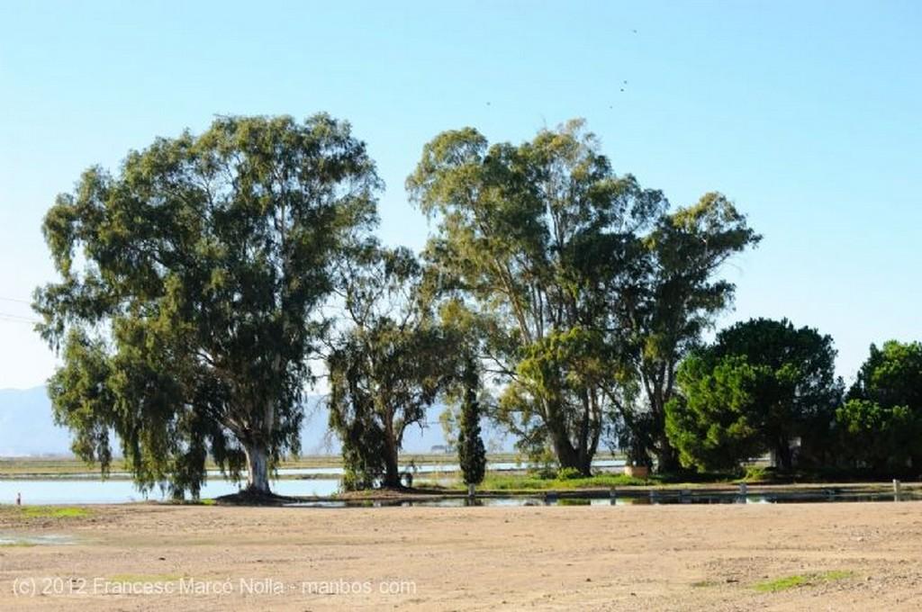 El Delta del Ebro Camada de Reses Bravas Tarragona