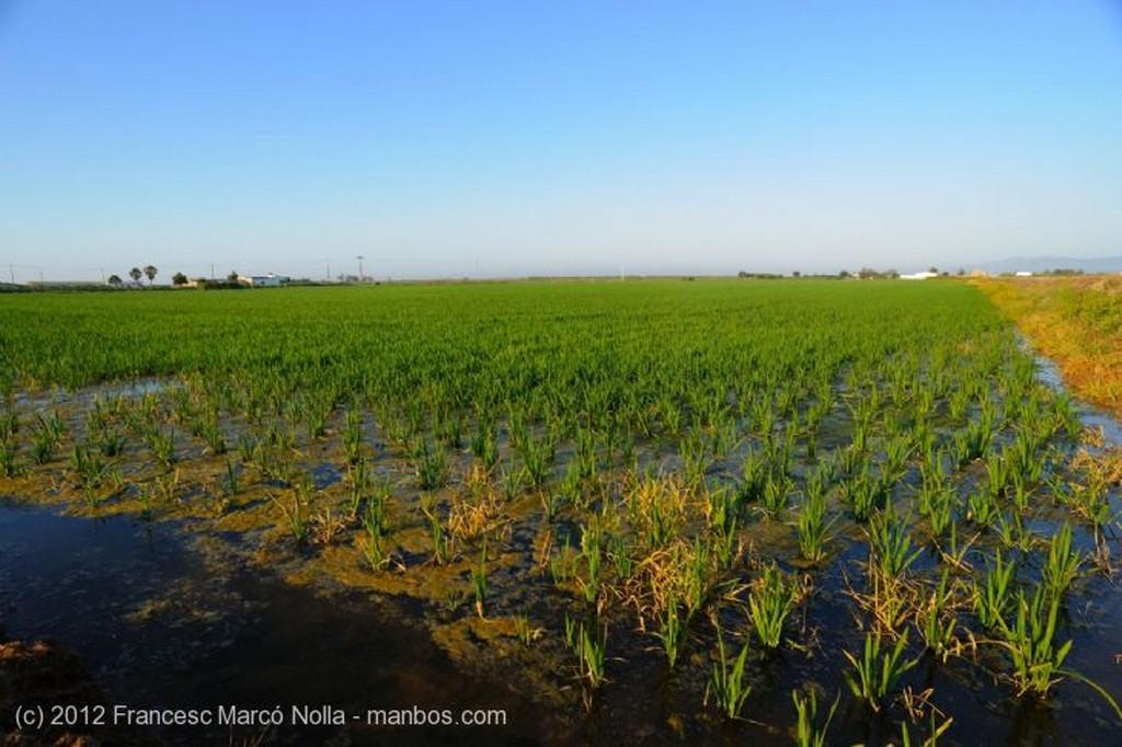 El Delta del Ebro Los Arrozales del Delta Tarragona