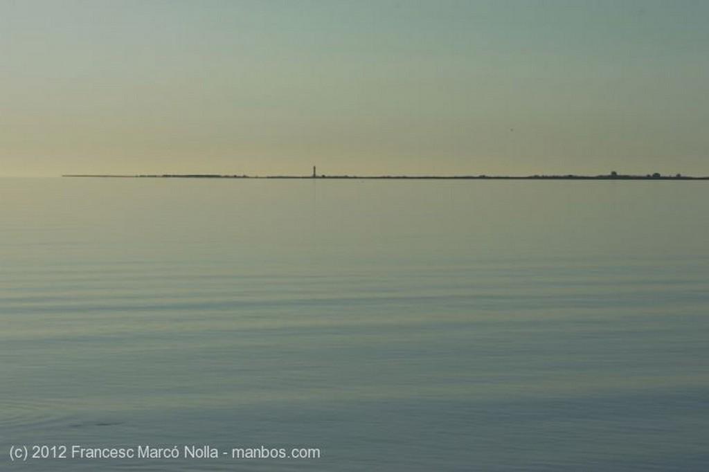 El Delta del Ebro Los Arrozales en Junio Tarragona
