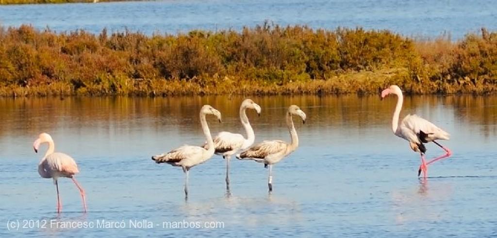 El Delta del Ebro Flamencos Rosados Tarragona