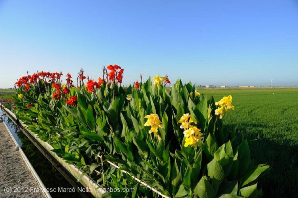El Delta del Ebro Tipica Masia del Delta Tarragona