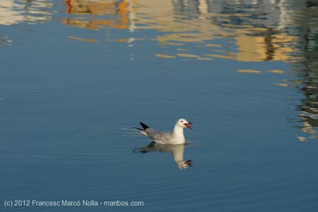 El Delta del ebro El Puerto de L Ampolla Tarragona