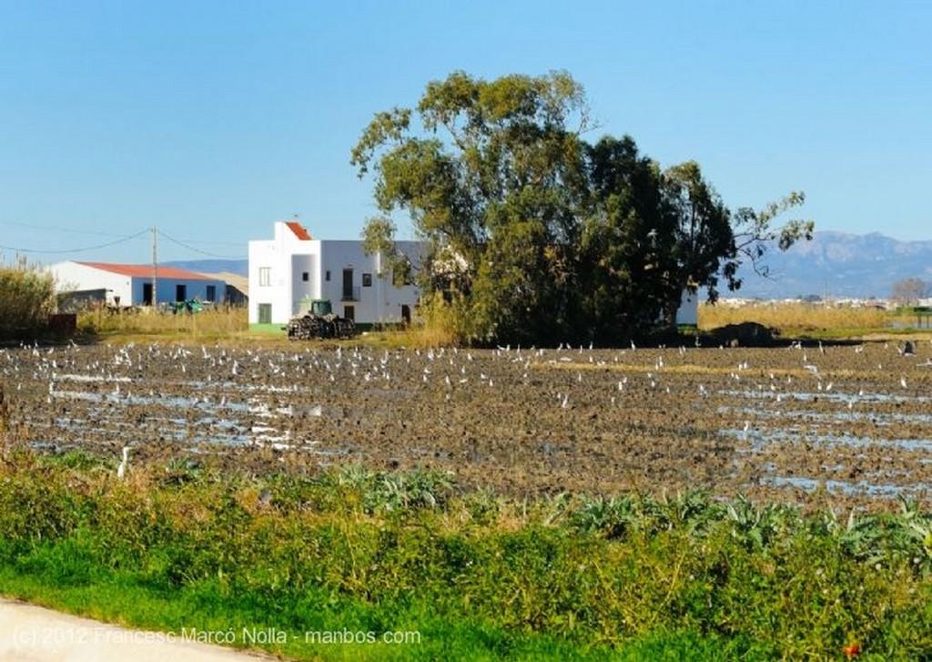 El Delta del Ebro Los Arrozales de Els Guiamets Tarragona
