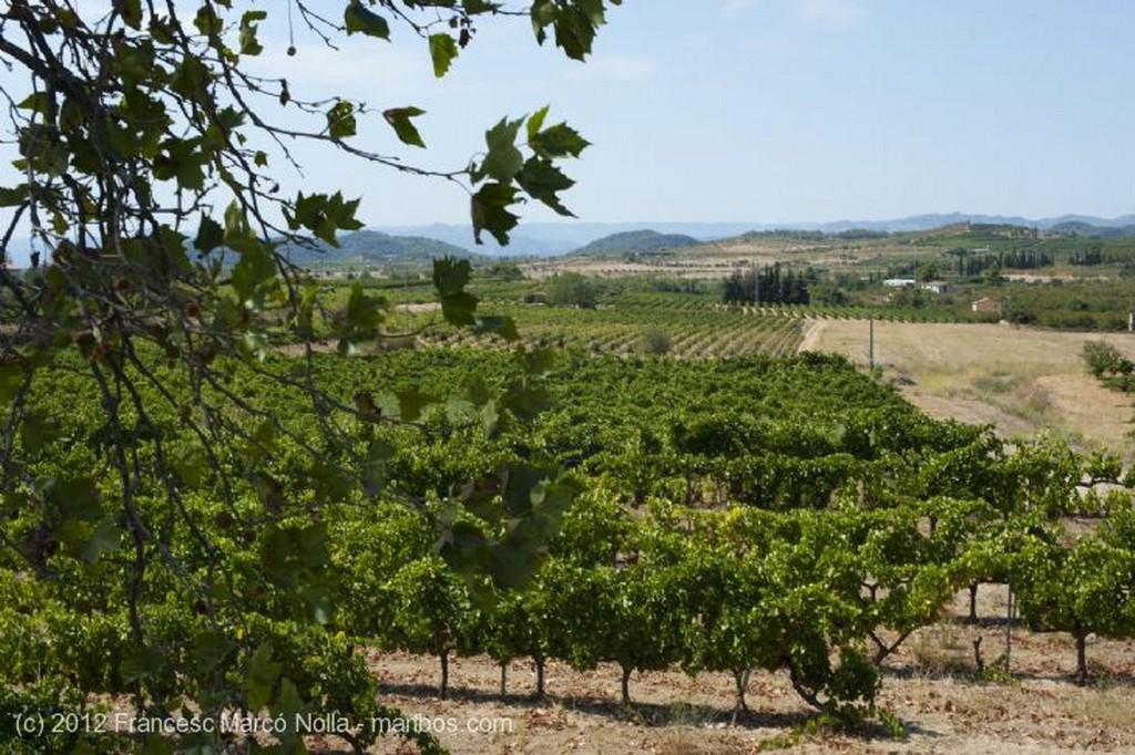 El Priorato Maduradas Bajo el Sol Tarragona