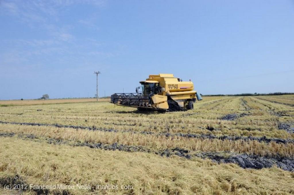 El Delta del Ebro Cultivando los Arrozales Tarragona