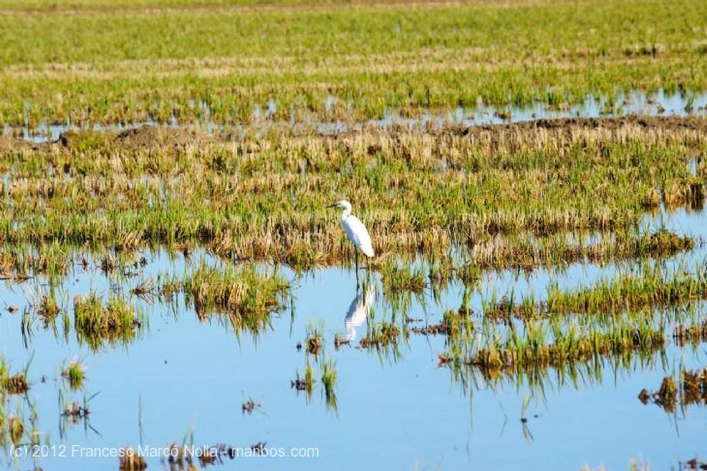 El Delta del Ebro Parque Natural Delta del Ebro Tarragona