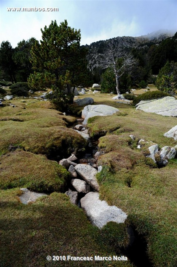Cerdanya Malniu  bosques  Gerona