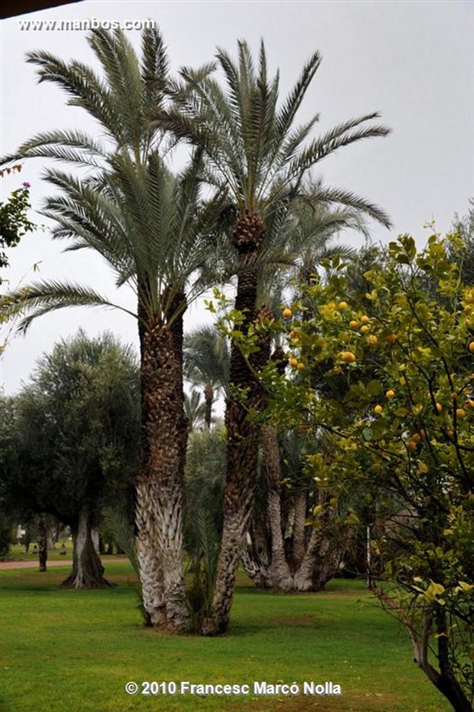 Marruecos  jardines la palmeraie-marrakech Marruecos