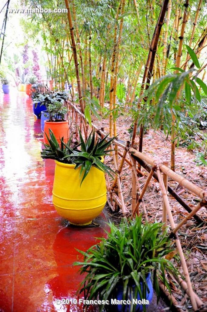 Marruecos  jardines majorel-marrakech Marruecos