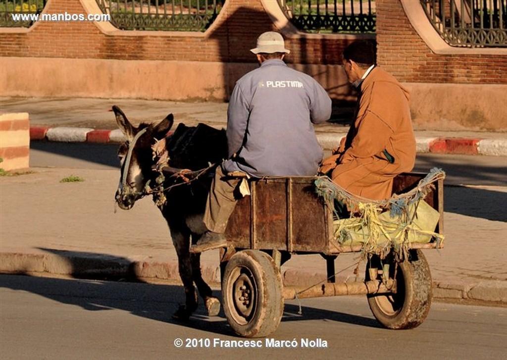 Marruecos  la palmeraie- marrakech Marruecos