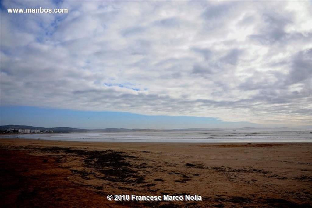 Marruecos  gaviota solitaria-esaouira Marruecos