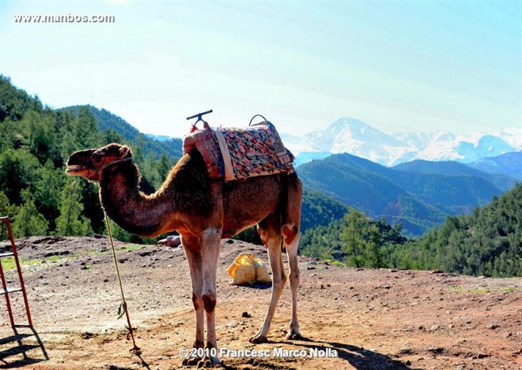 Marruecos  El Atlas Nevado Marruecos