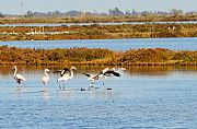 Parque Natural Delta del Ebro, El Delta del Ebro, España
