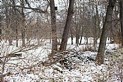 Foto de Berlin, Tiergarten, Alemania - Tiergarten Nevado