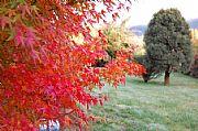 Camara canon otoño en el sur Enrique Rosas VALDIVIA Foto: 9722