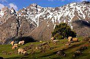 Camara canon ovejas Enrique Rosas MAGALLANES Foto: 9727