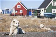 Qeqertarsuak, Qeqertarsuak, Groenlandia
