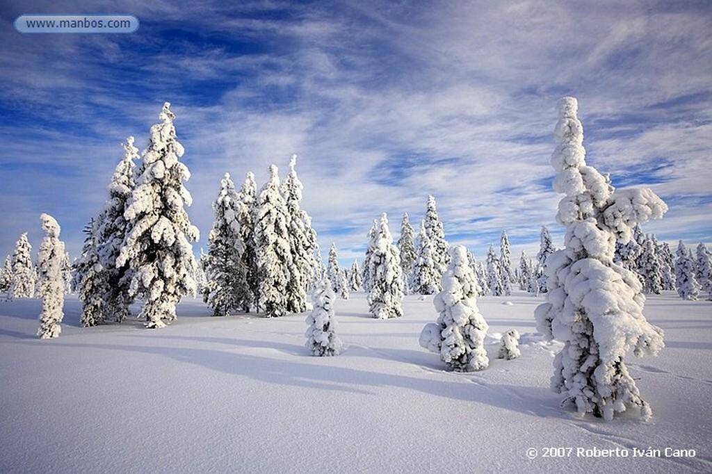 Laponia Bosques nevados de Laponia Laponia