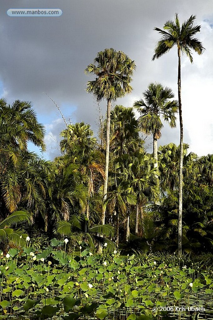 Mauricio Mauricio