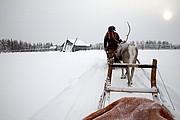 Trineos de renos, Laponia, Finlandia