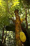 Jardin especias, Reunion, Reunion