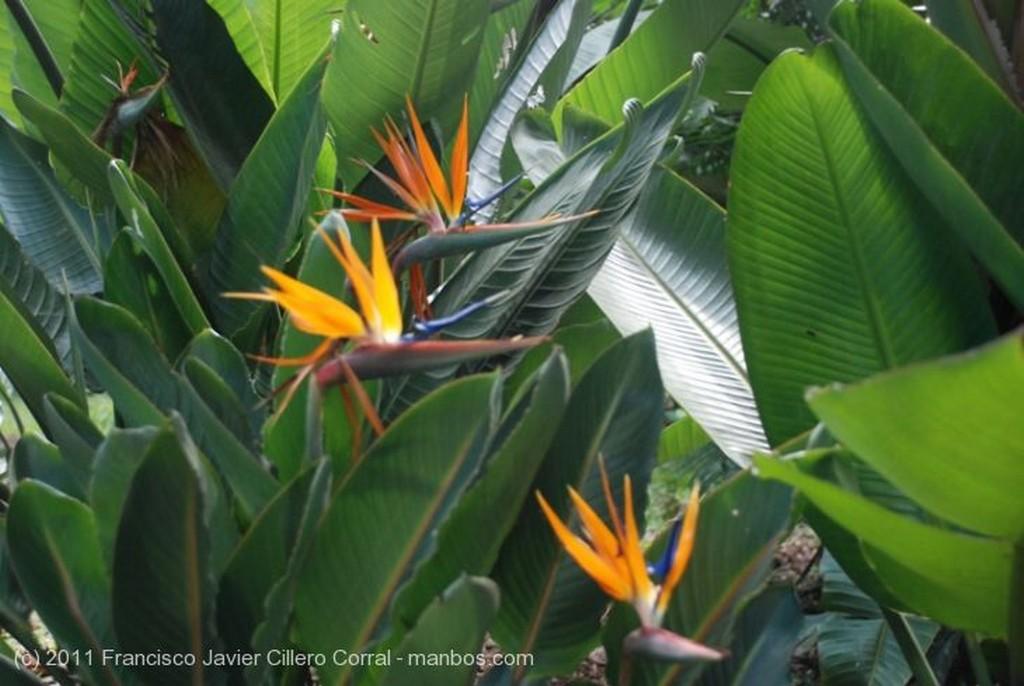 Medellin Flor de San Joaquin Antioquia