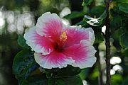 Camara NIKON D80 Flor de San Joaquin Francisco Javier Cillero Corral MEDELLIN Foto: 27535