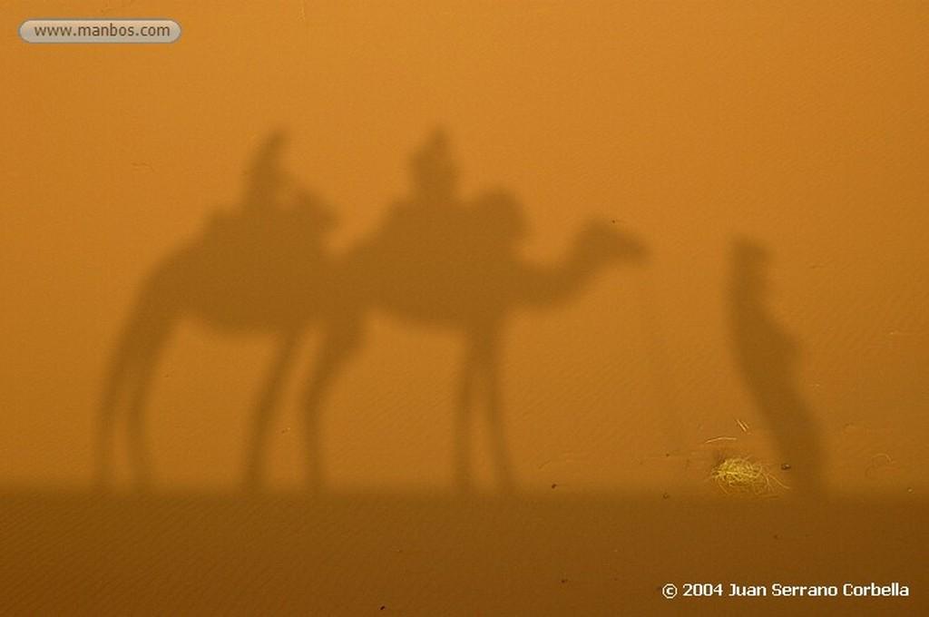 Merzouga Camel Marruecos
