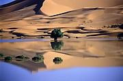 Camara Nikon COOLSCAN IV ED Camel Juan Serrano Corbella MERZOUGA Foto: 12098