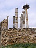Camara Panasonic Lumix DMC-LX2 Templo de Júpiter Jose Luis Filpo Cabana VOLUBILIS Foto: 18324