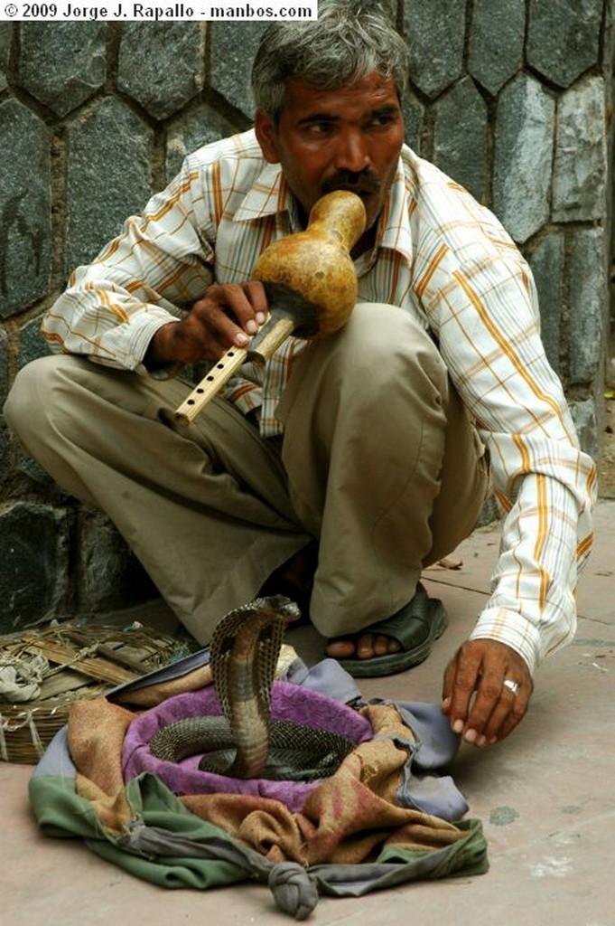 New Delhi tradicion jaenista New Delhi