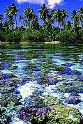 Le Thaa Isla Private, Isla de Thaa, Polinesia Francesa