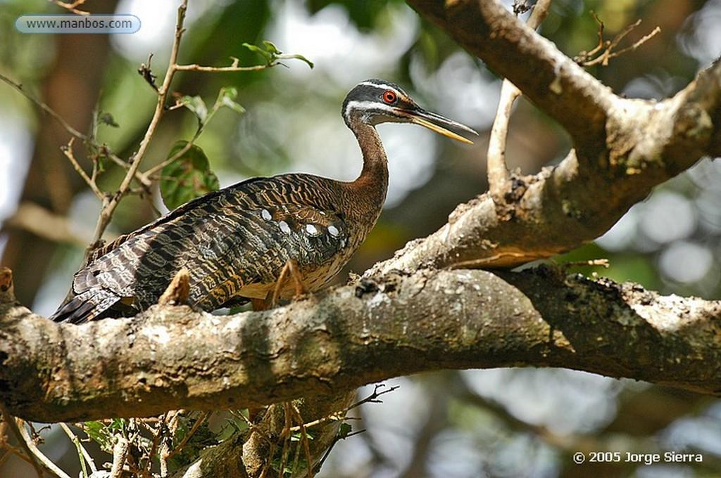 Naturaleza Avutarda (Otis tarda) Zamora