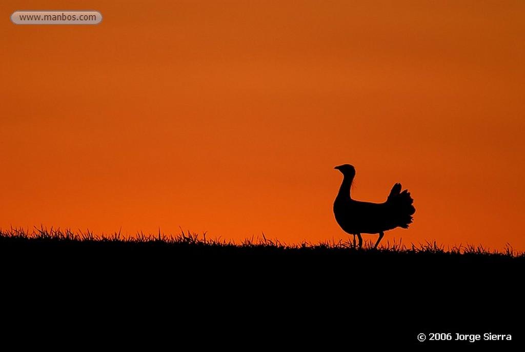 Naturaleza Babuino Parque Nacional Kruger