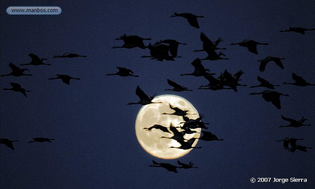 Naturaleza Zorro - Fox (Vulpes vulpes) Toledo