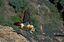 Naturaleza Quebrantahuesos (Gypaetus barbatus) Huesca