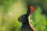 Conejo, Naturaleza, España